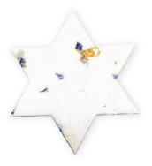 Star Of David, OR-M-69, Forget me Not seeds