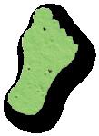 Foot, MVS-19